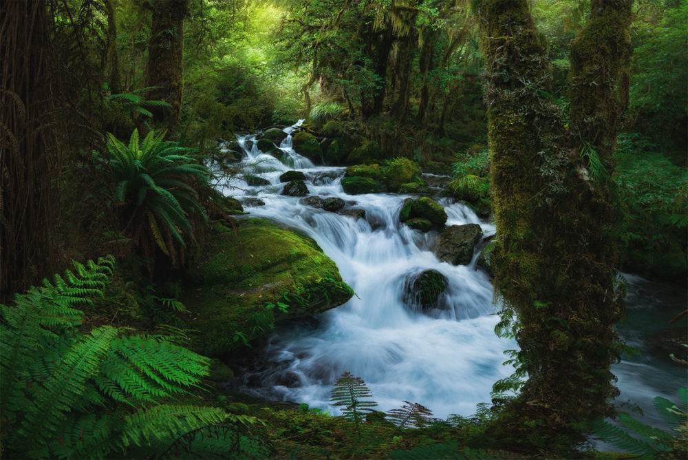 William Patino Forest Waterfall