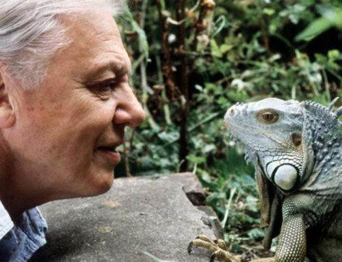 Our Favourite David Attenborough Conservation Videos — A Help or Hindrance?